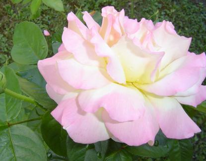 Bouquet Provincial 2007