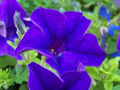 Journée des fleurs et des saveurs