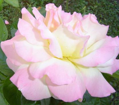 Rose et Jules Lacherie-Gossuin